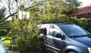 Lots of Fallen Trees - Hurricane Irma 2017